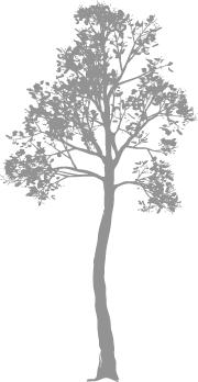 wetgeving rondom de boom